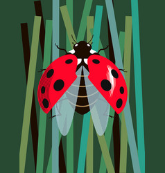 Ladybug spreads its wings vector