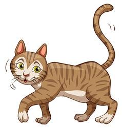 Little brown cat walking vector image