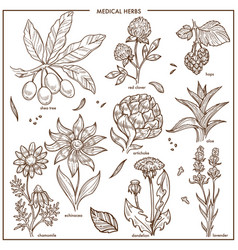 Medical herbs and herbal medicine plants vector