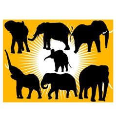 elephants vs vector image
