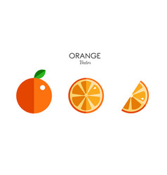 orange citrus icons modern flat style vector image