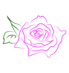 pink rose drawing on white background vector image
