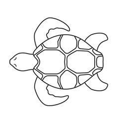 Sea turtle iconoutline icon vector