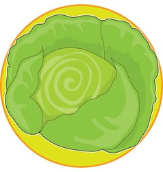 cabbage graphic vector image