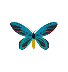 blue butterfly colorful icon top view art vector image