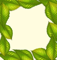 Frame design with green leaves vector