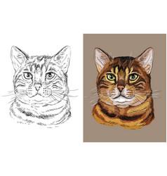 Portrait bengal cat vector