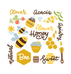 set bee honey honey elements camomile clover vector image