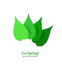 Green leaves spring background vector image