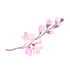 Branch cherry blossom with tender pink flowers vector