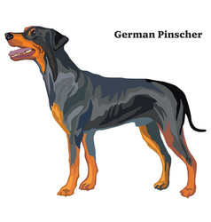 colored decorative standing portrait of dog vector image