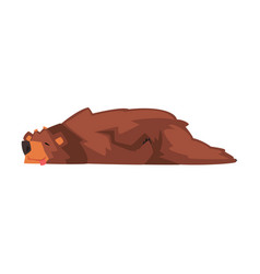 Cute sleeping brown bear wild forest animal vector