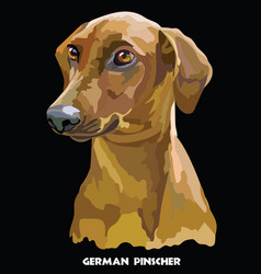 German pinscher colorful portrait vector