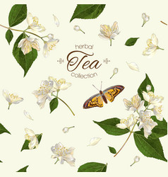 Jasmine tea seamless pattern vector image