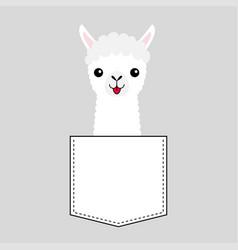 Llama alpaca face head in pocket cute cartoon vector