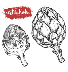 hand drawn artichoke isolated on white background vector image
