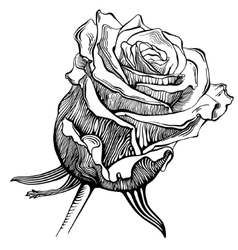 Black and white digital drawing sketch rose vector