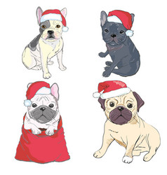 christmas greeting card pug dog with red santa s vector image vector image
