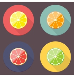 Citrus Icon Collection vector image