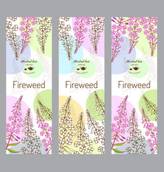 Herbal tea collection fireweed vector