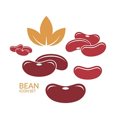 Red kidney bean vector image