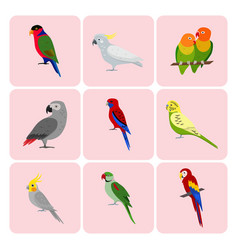 Set of colorful parrot icons vector