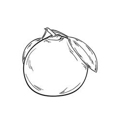 Sketch of the tangerine vector
