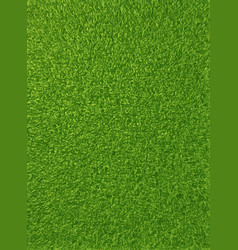 background texture of fresh green grass vector image vector image