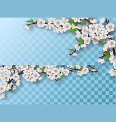set of spring blooming fruit tree branches vector image