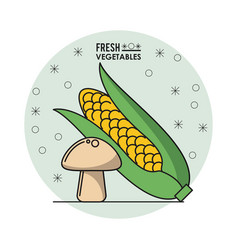colorful poster of fresh vegetables with cob corn vector image