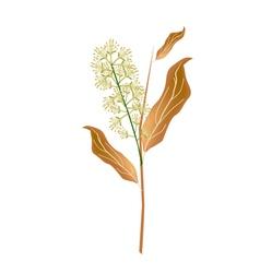 Combretum Flower or Combretum Latifolium Flower vector