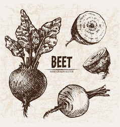 Digital detailed line art beet vector