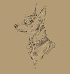 Monochrome miniature pinscher hand drawing vector