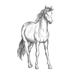 Satnding white horse sketch portrait vector image
