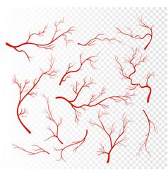 set of red human veins vector image