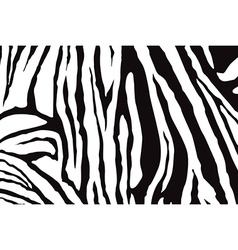 Zebra Stripes Pattern vector
