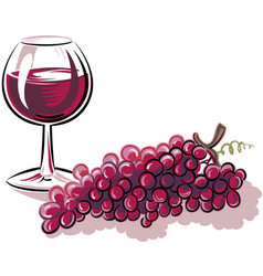 Glass red wine and a bunch ripe grapes vector