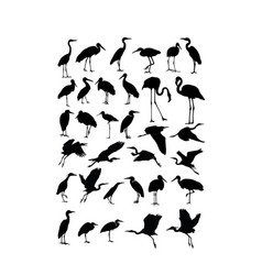 Heron egret and stork bird silhouettes vector