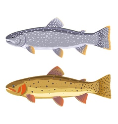 Lake trout and cutthroat trout vector