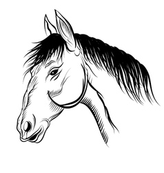 mare vector image