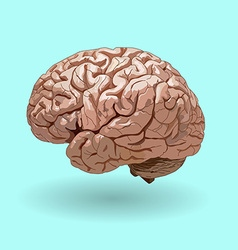 Realistic human brain on a blue background vector