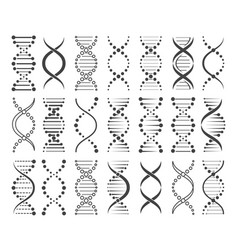 structure chromosomes sketch vector image