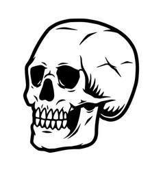 vintage concept human skull vector image