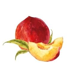 Watercolor tasty peach vector