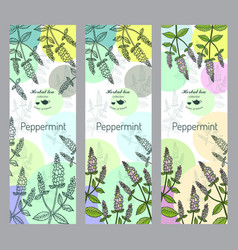herbal tea collection peppermint banner set vector image vector image