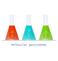 Glass flasks with colored solutions and food vector