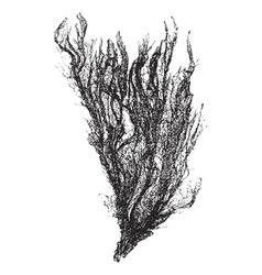 Gutweed vintage engraving vector image