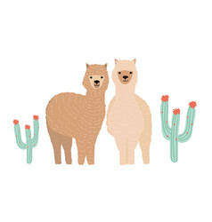 pair cute llamas isolated on white background vector image