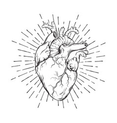 hand drawn human heart with sunburst vector image