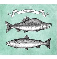 ink sketch of pink humpback salmon vector image